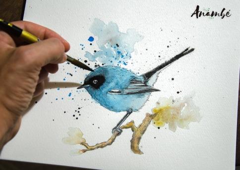 Tacuarita-Azul-(Polioptila-dumicola)